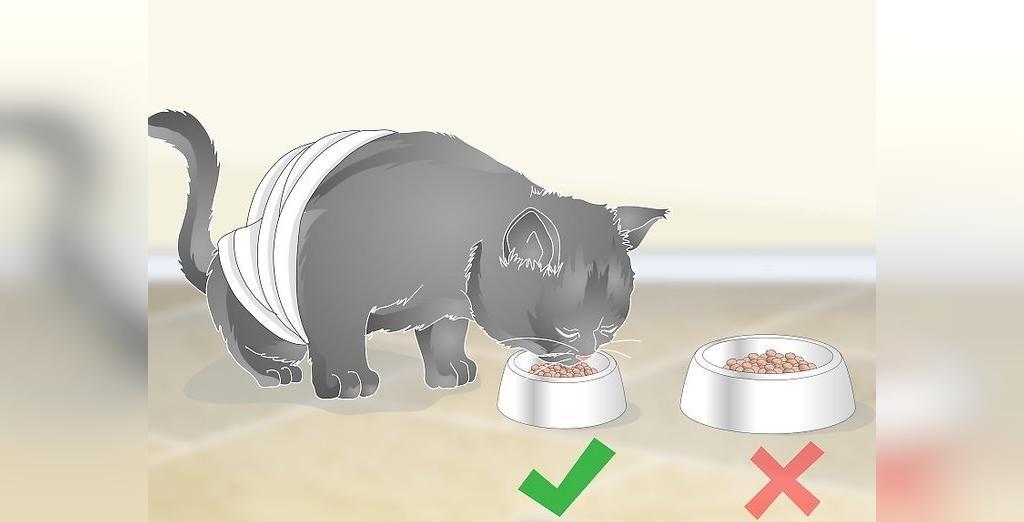 راه درمان استفراغ گربه