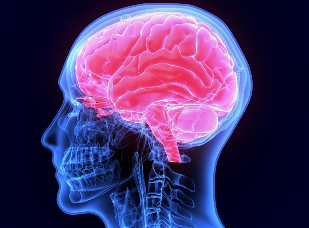 خواص گیاه پنج انگشت در پیشگیری از سکته مغزی و صرع