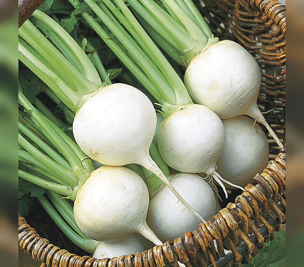 درمان جوش با تخم شلغم و تخم کلم