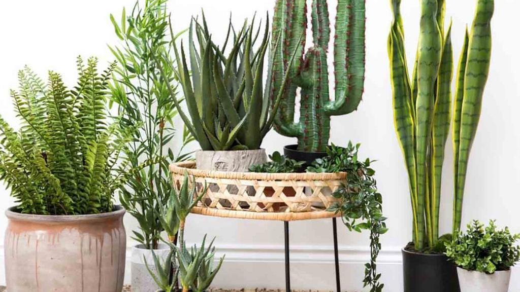 20 نوع از مقاوم ترین گل ها و گیاهان آپارتمانی و نکات نگهداری از آن ها