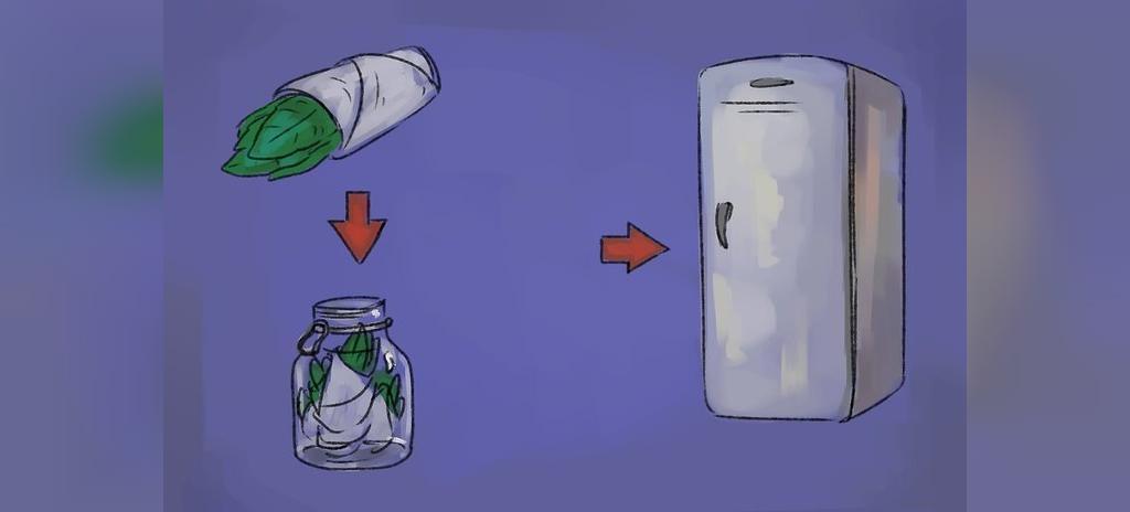 چگونه سبزی ریحان بکاریم؟