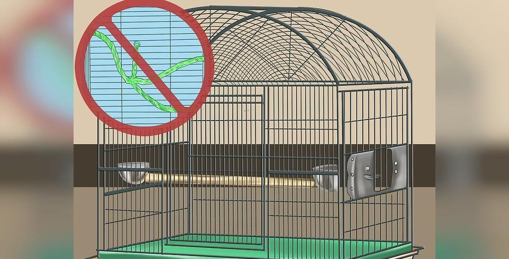 قفس مناسب برای مرغ مینا