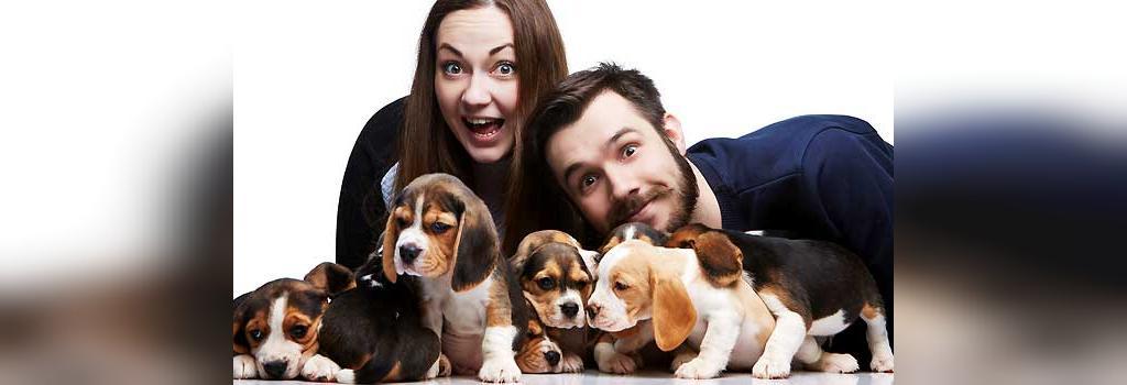 تعلیم و آموزش سگ