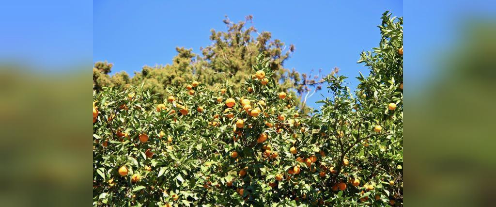 باغ های گیاه شناسی باتومی