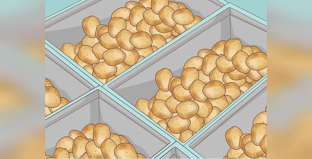 انبار کردن سیب زمینی کاشته شده درون کیسه