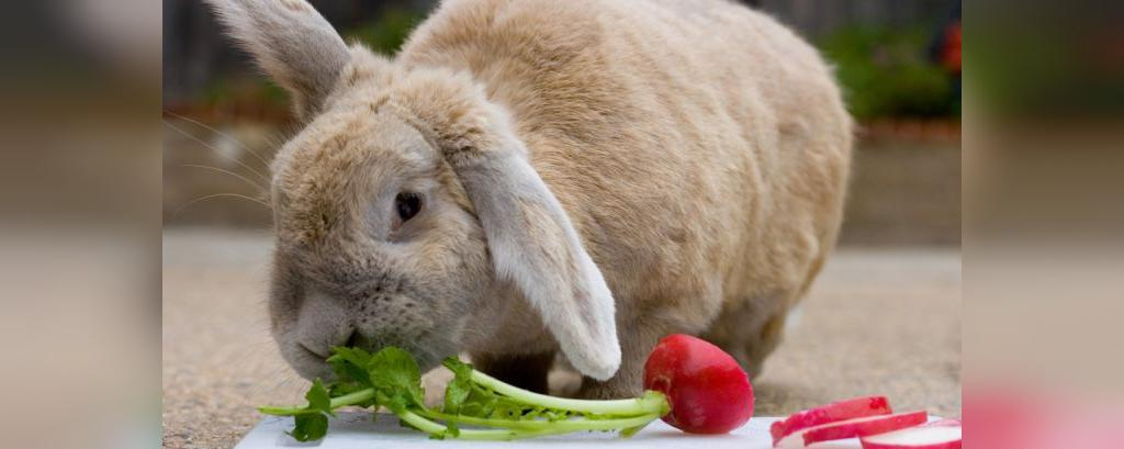 ایا خرگوش برای کودکان ضرر دارد