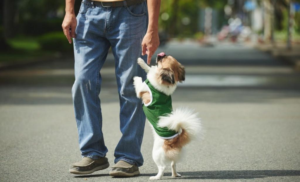 چطور سگ خود را تعلیم دهید