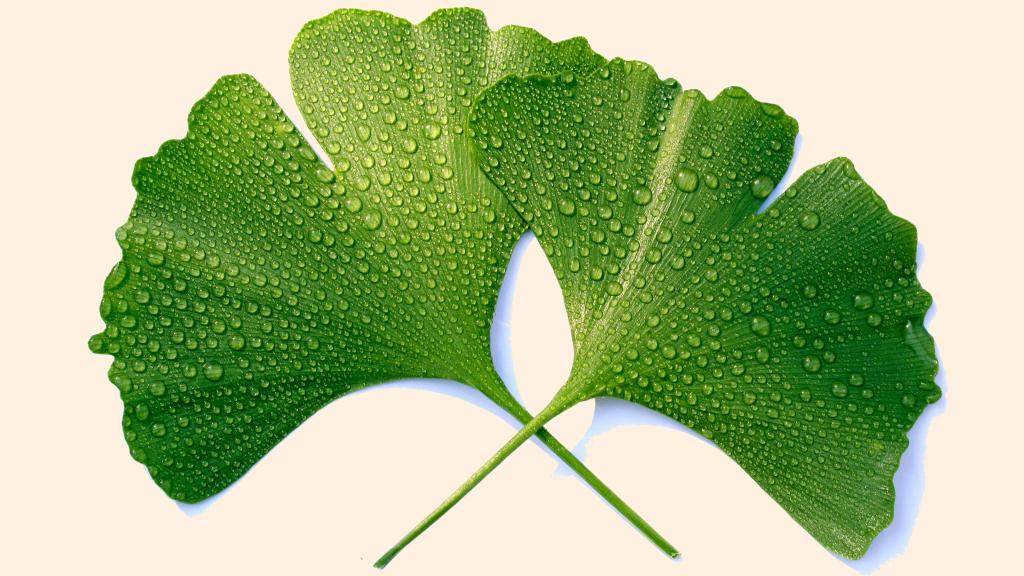 10 گیاه طبیعی برای تقویت حافظه، تمرکز و افزایش قدرت و عملکرد مغز