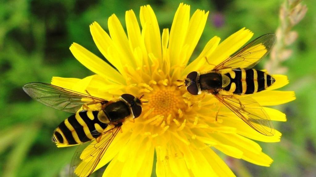 فواید حشرات برای انسان چیست و محصولات تولیدی از حشرات مفید