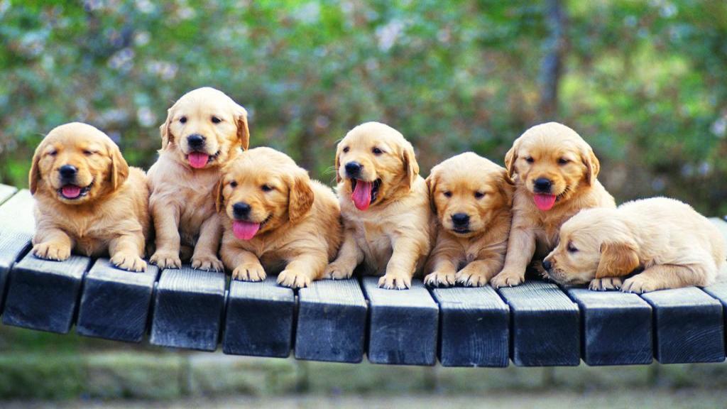 100 مورد از بهترین و پرطرفدارترین اسم های سگ نر و ماده + روش انتخاب مناسب ترین اسم برای سگ
