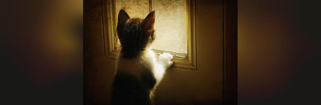 چیزهای شگفت انگیز در مورد گربه ها