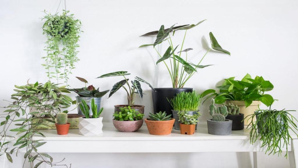 نه، گیاهان خانگی هوای خانه شما را تصفیه نمی کنند!