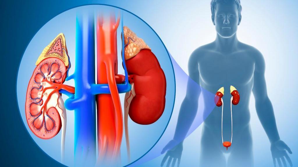 عفونت کلیه (پیلونفریت): علائم، علل، روش تشخیص، درمان و پیشگیری از آن