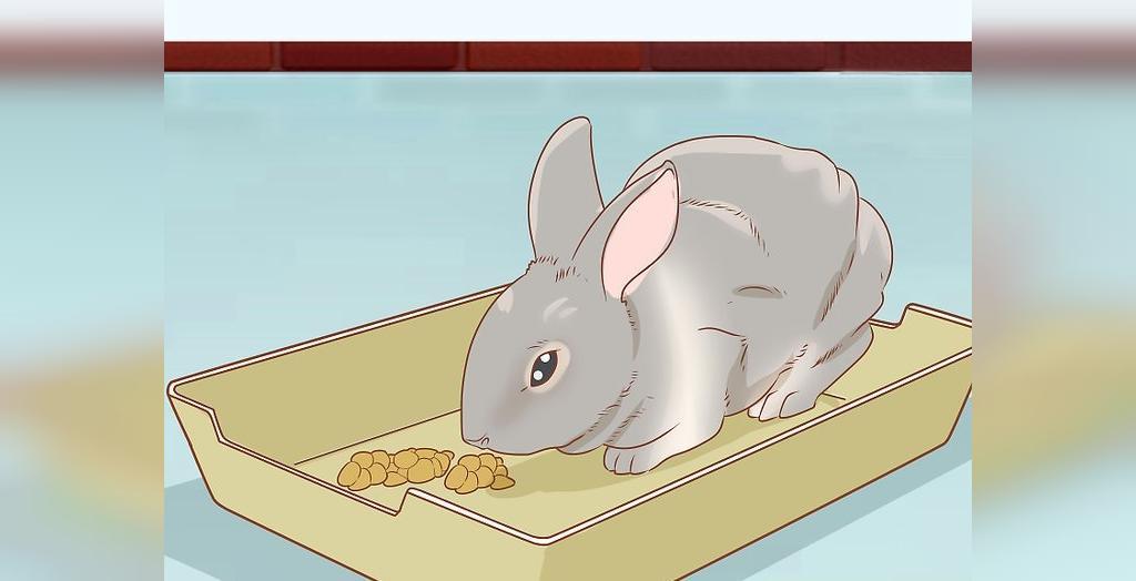 آنچه درباره مراقبت از خرگوش باید بدانید