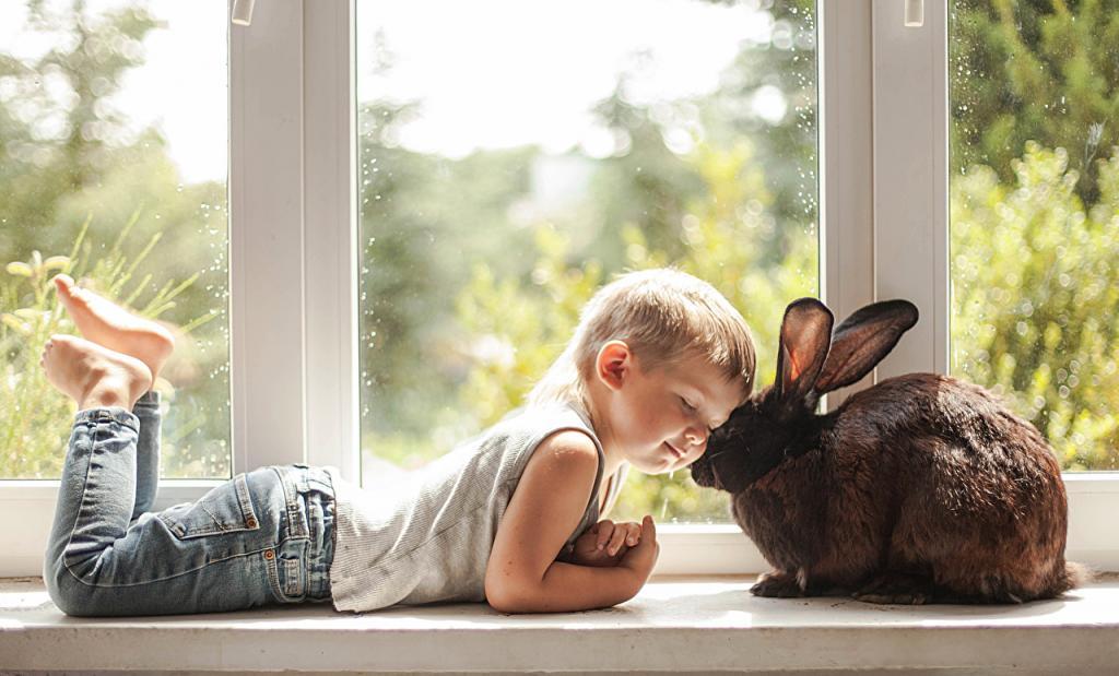ژست عکس پسر بچه با حیوانات خانگی