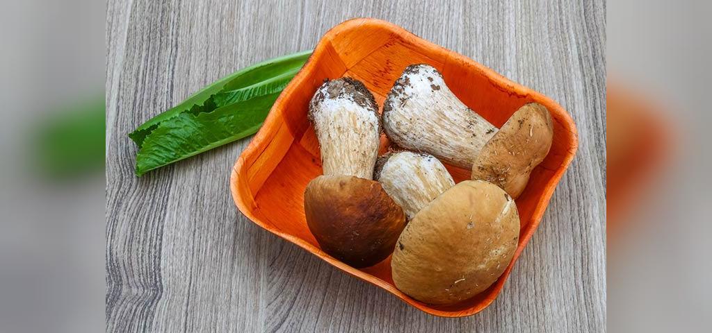 مصرف قارچ های پورچینی در بارداری