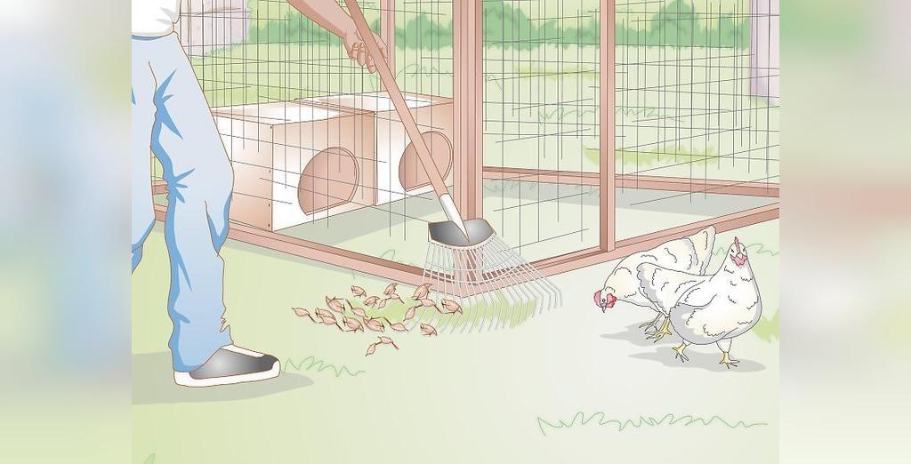 شرایط نگهداری از جوجه مرغ