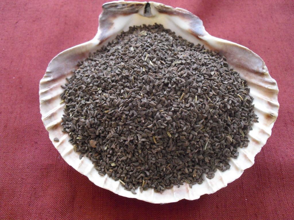 درمان بیماری های مربوط به ریه و کبد با گیاه اسفند