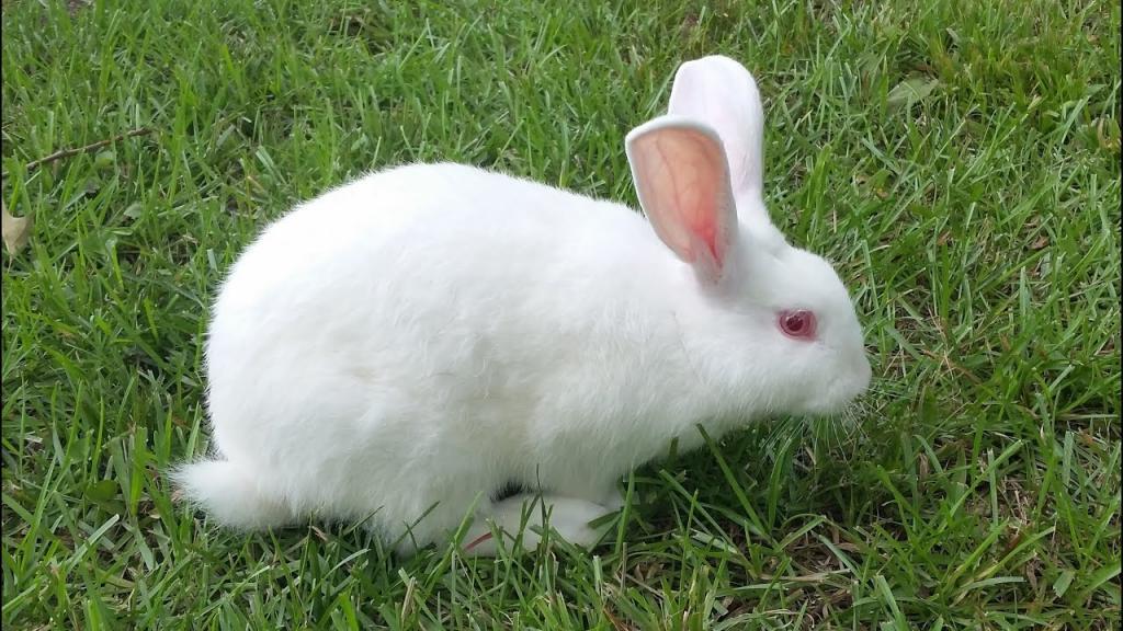 آموزش نگهداری از خرگوش؛ روش های مراقبت از خرگوش در خانه و نظافت آن