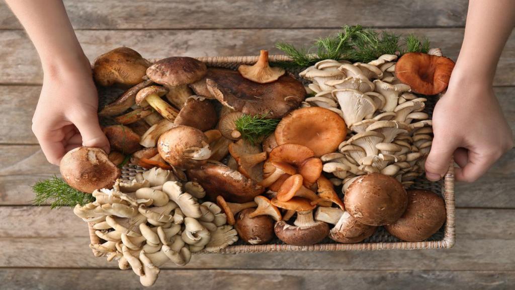 خواص قارچ برای کم خونی، کاهش کلسترول