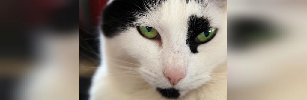 حقیقت: گربه ها با چشم ها می بوسند