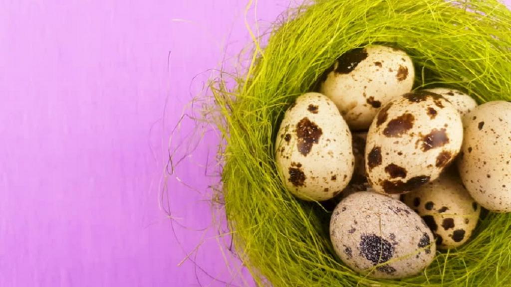تخم بلدرچین در رژیم غذایی مبتنی بر پروتئین گزینه خوبی است