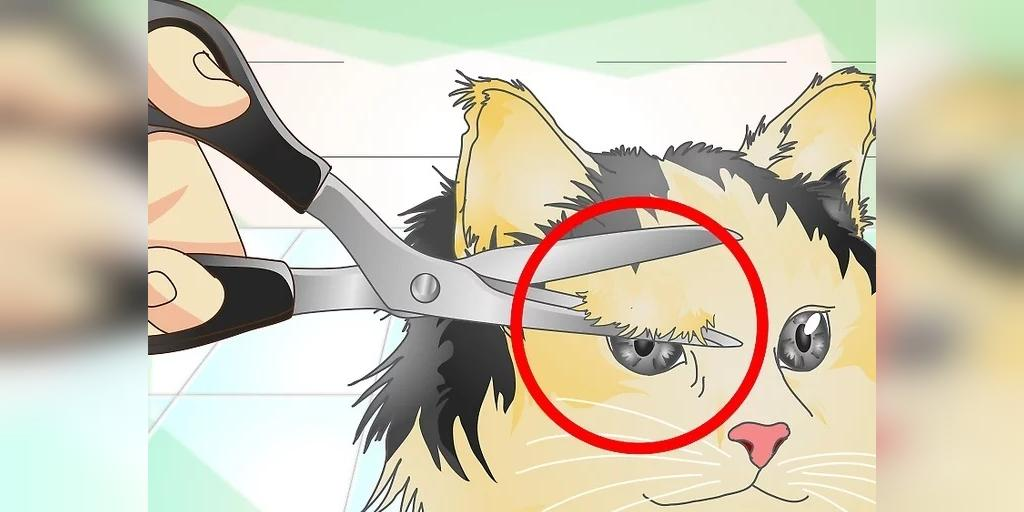 راه نگهداری از عفونت چشم گربه
