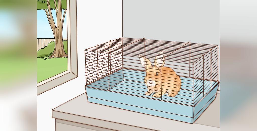 وسایل مورد نیاز برای نگهداری خرگوش