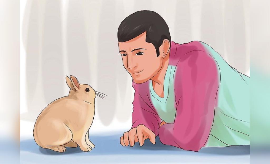 نکات مهم برای بازی کردن با خرگوش