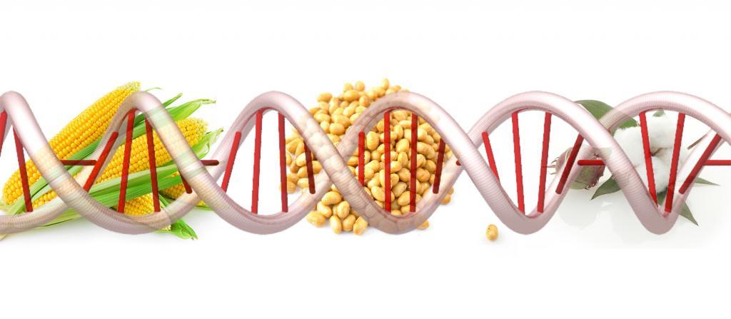 عوارض جانبی محصولات دستکاری شده ژنتیکی برای کودکان