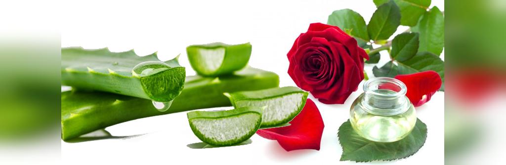درمان جای جوش با آلویه ورا و گلاب