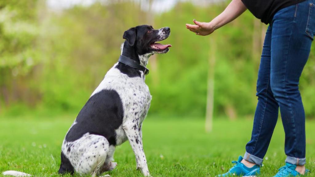تربیت سگ با به کارگیری روش های تنبیهی صحیح