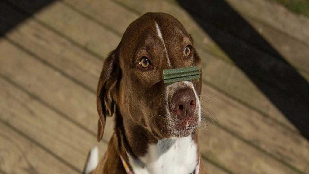 10 مورد از بهترین نکات برای آموزش سگ که توسط مربیان حرفه ای ارائه شده است