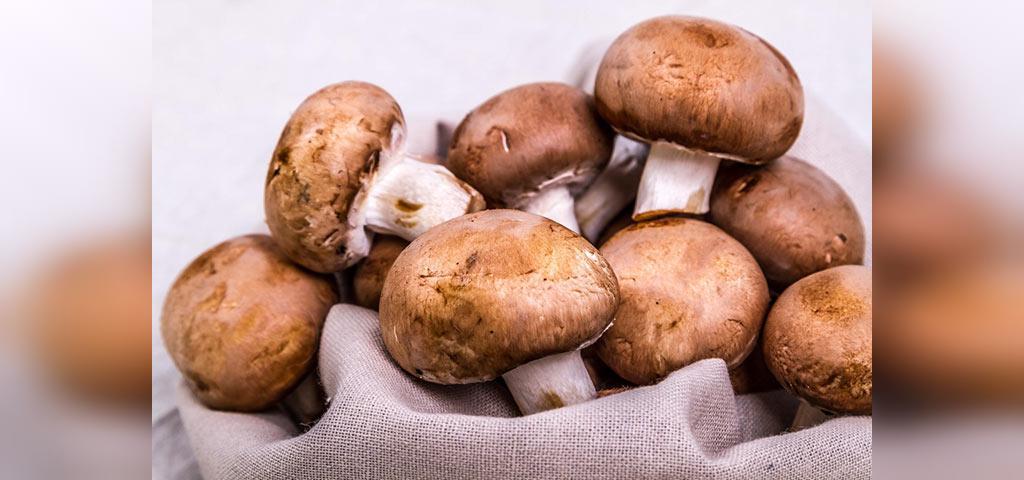 خوردن قارچ قهوه ای در بارداری