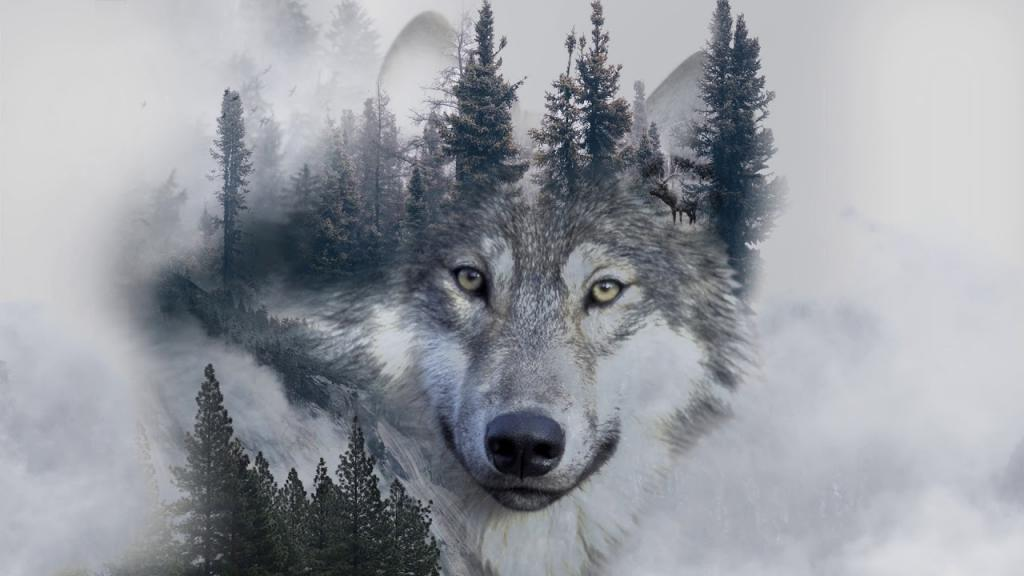 عکس گرگ و طبیعت برای پروفایل