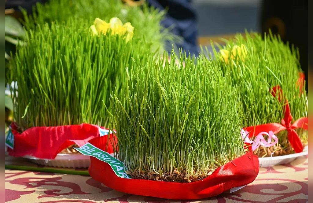 دلایل قرار دادن سبزه در سفره هفت سین