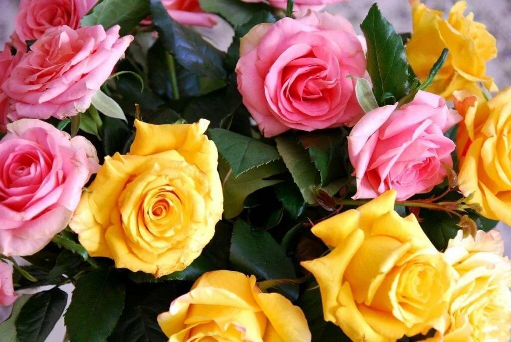 بهترین ترکیب های گل رز با رنگ های مختلط