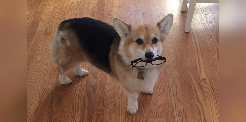 انتخاب اسامی انسان برای سگ