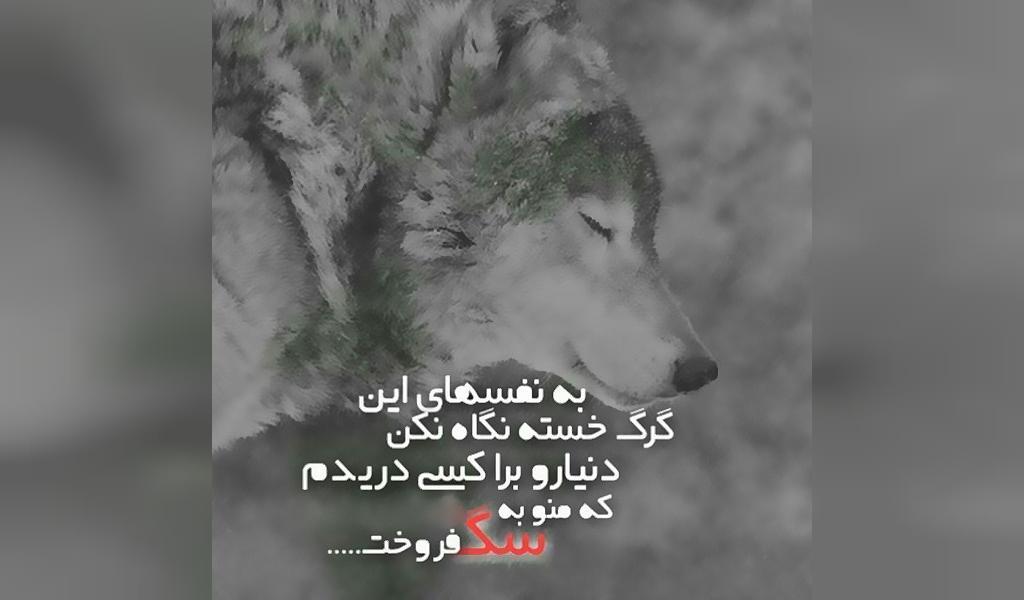 عکس نوشته زیبا درباره گرگ برای پروفایل