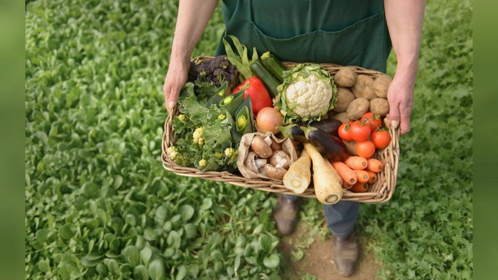 استفاده از میوه و سبزیجات ارگانیک برای کودکان