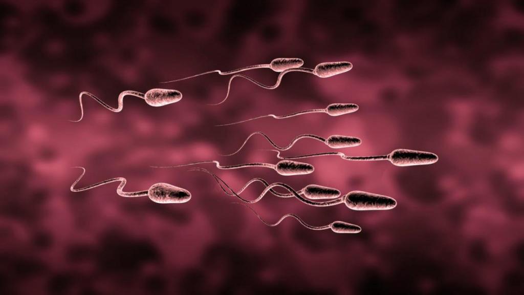 بهترین راه های افزایش تعداد اسپرم چیست؟ + غذاها و داروهای افزایش دهنده و تقویت کننده اسپرم