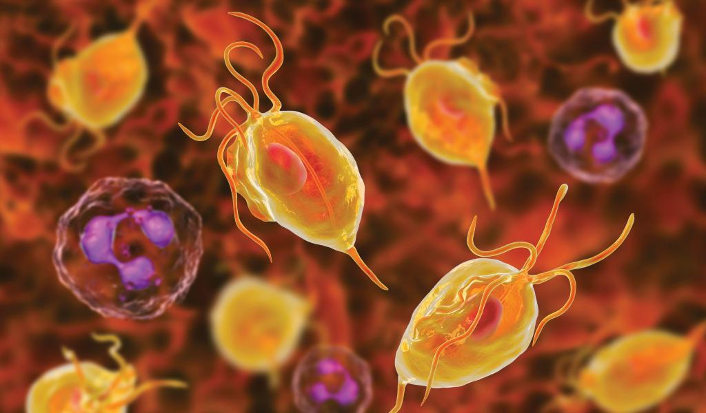 عفونت تریکومونیازیس از بیماری های آمیزشی منتقله