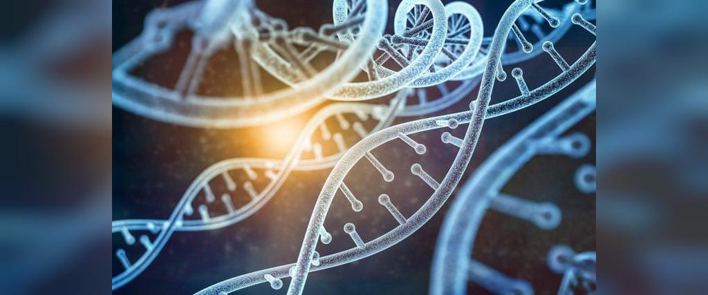 دستکاری ژنتیکی حیوانات
