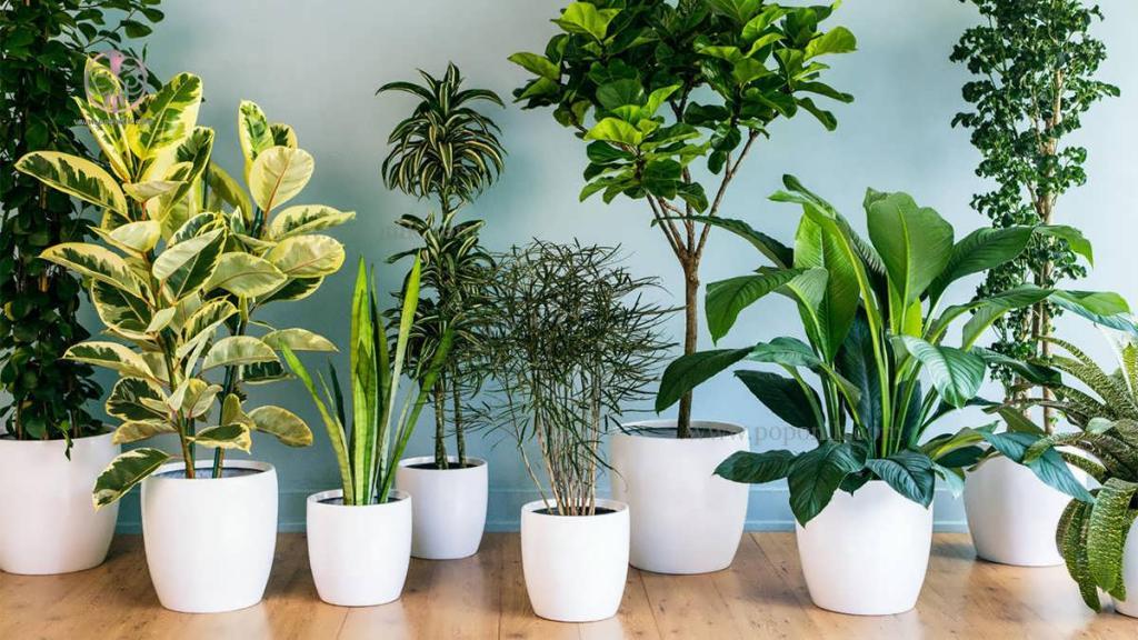 تصفیه هوای گیاهان خانگی در منزل