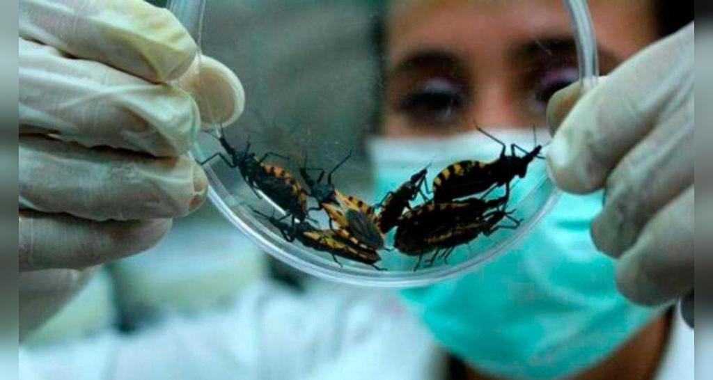 آیا نیش حشرات در هنگام بارداری خطرناک است؟