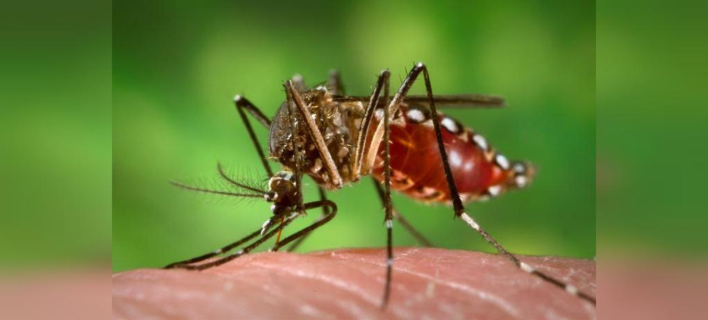 تشخیص، درمان و جلوگیری از ابتلا به بیماری تب زرد