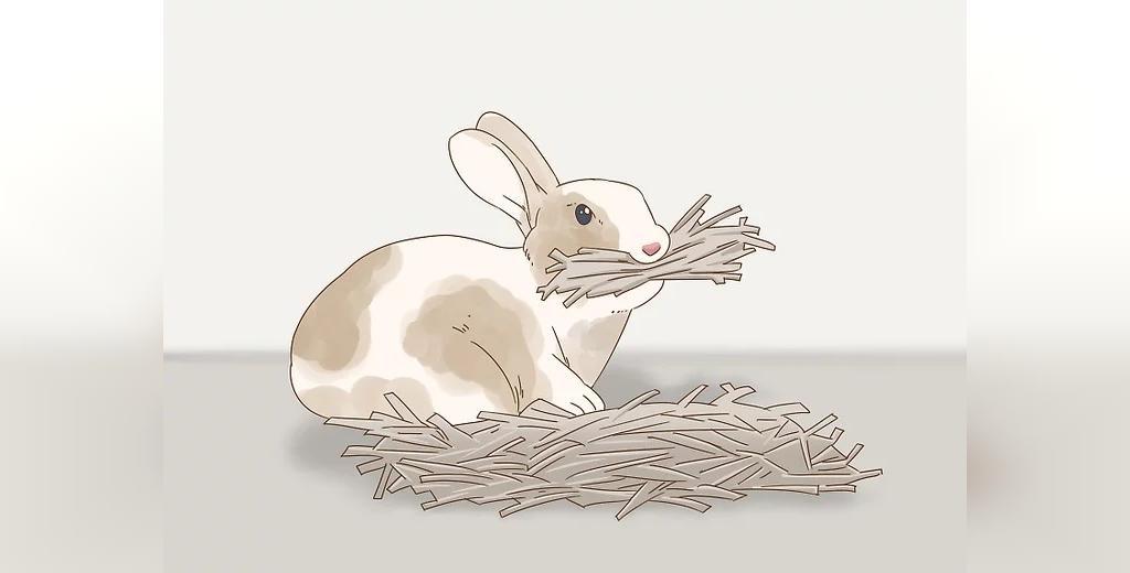 علائم بارداری خرگوش