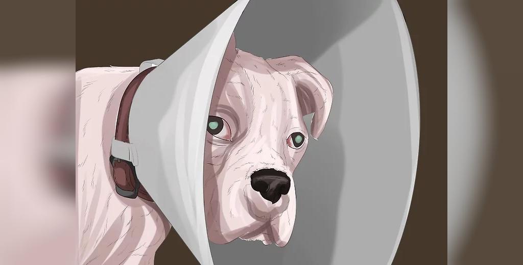 نکات مهم در زمان درمان عفونت چشم سگ