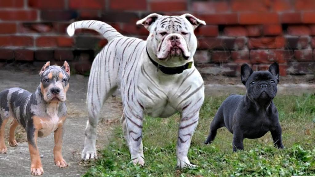 10 مورد از قوی ترین و قدرتمندترین نژادهای سگ جهان + واقعیت های جالب در مورد آنها