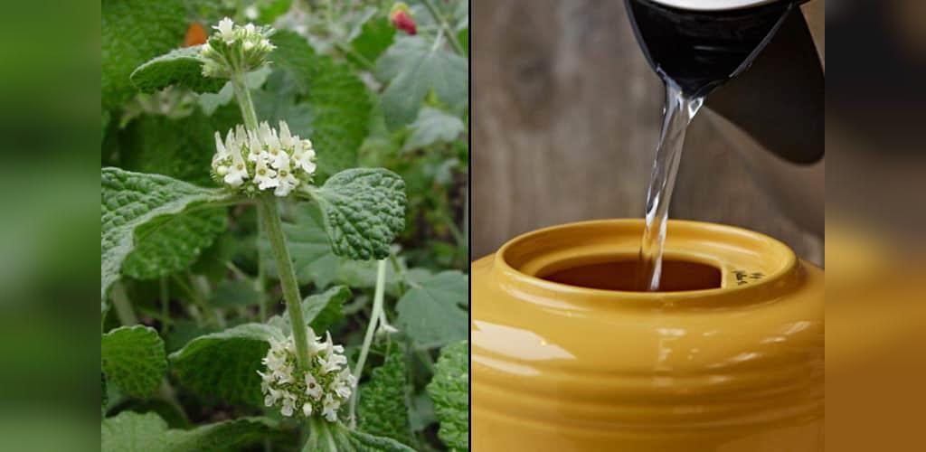 طرز تهیه چای فراسیون(گندنای کوهی)
